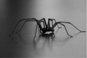 "Arachnofobie se nejspíš dá ""odoperovat."" Foto: Belgium Digital Forum"