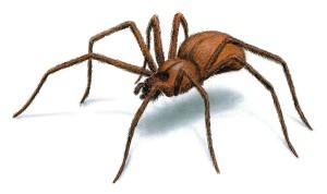 Lekli jste se? Nemůžete za to. Strach z pavouků je evolučně vrozený. Foto: Orkin.com