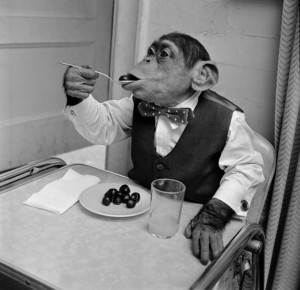 Vzhledem k aktuální nabídce není důvod, aby v televizi nevařil šimpanz. Ilustrační foto: TV Nova