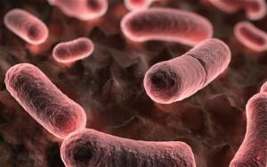 Od roku 1970 Kalifornie zaznamenala 40 případů nákazy morem, devět lidí pak této nemoci podlehlo. Ilustrační foto: Wikipedia